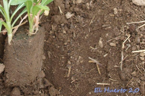 Con el hoyo para una nueva planta