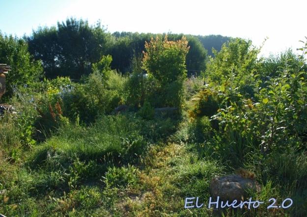 Vistas del huerto al comienzo de la mañana, en la semana 26.1