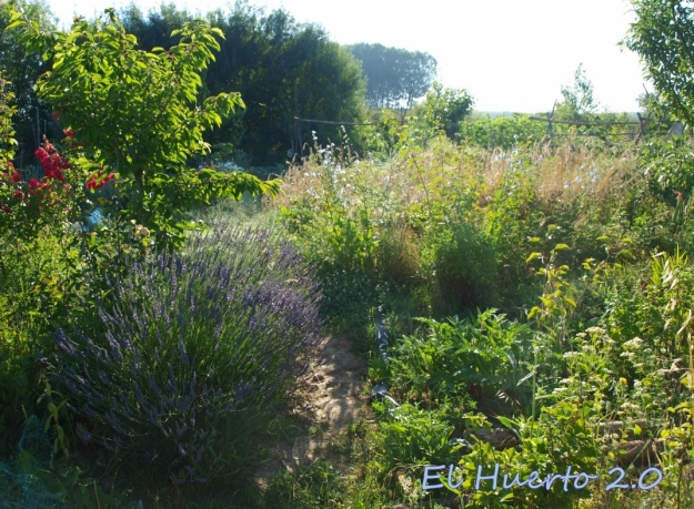 Vistas del huerto al comienzo de la mañana, en la semana 26.3