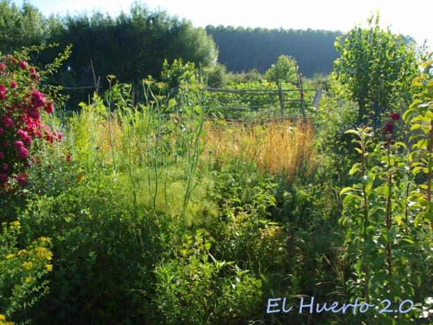 Vistas del huerto al comienzo de la mañana, en la semana 26.4