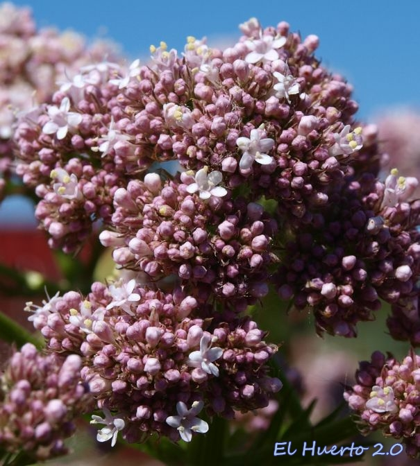 Detalles de la flor al comienzo