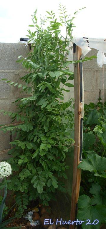 Planta junto a la entrada del invernadero