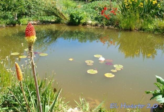 Posicióngeneral al lado del estanque