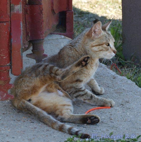 ¿Quizá haya gatitos  entre la hierba?