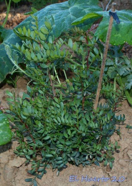 Una de las plantas en el mes de julio