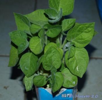 Plantas en el semillero