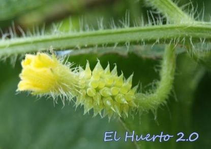 Flor femenina