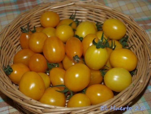 Tomates cherry pera amarillo