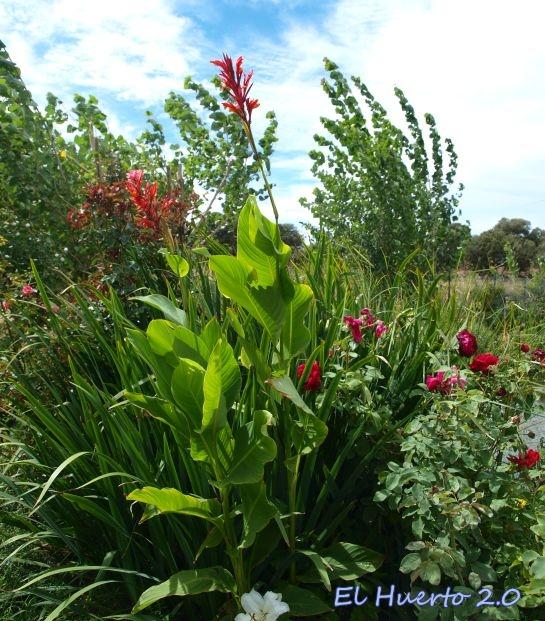 Planta junto al estanque