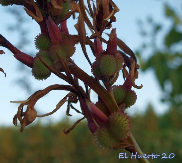 Formación de semillas