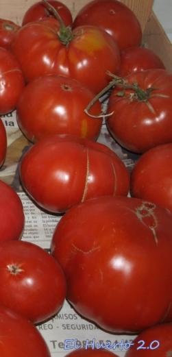 Tomates maduros