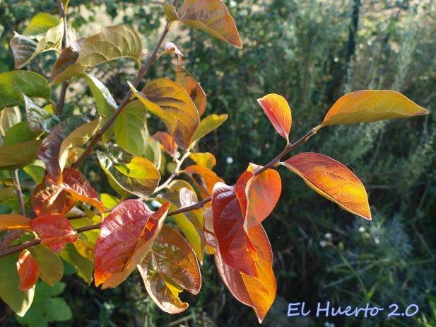 Preventivo ante el otoño