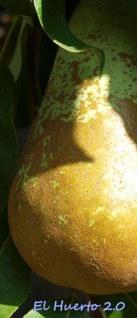 Fruta sin marcas