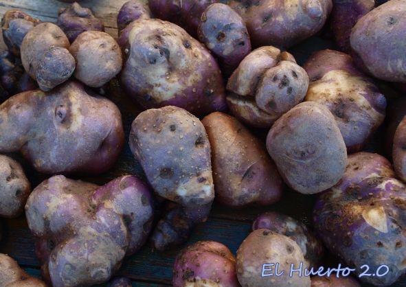 Patatas negras