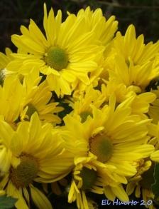 y amarillo intenso