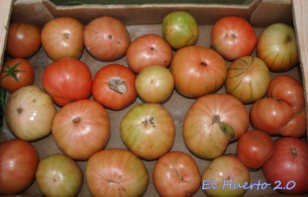 Caja de tomates en el fin de semana