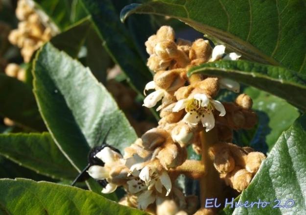Flores y polinizadores