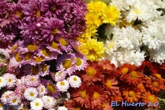 Recogiendo flores