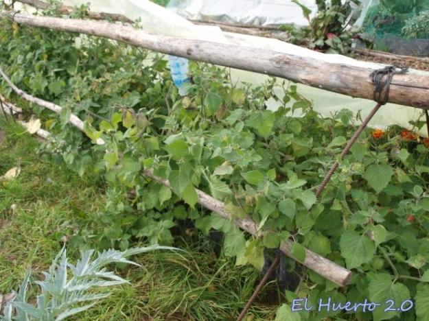 Túnel con las plantas