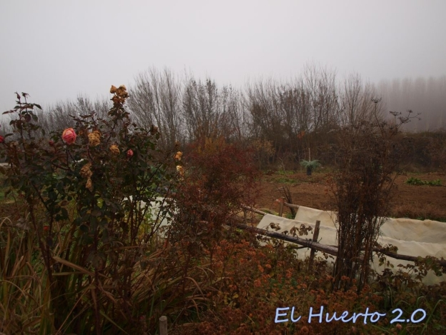 Mirada al huerto 49.6
