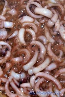 Tiritas de calamar