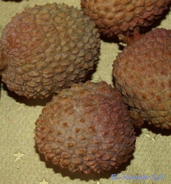 Detalle de la cáscara de estos frutos