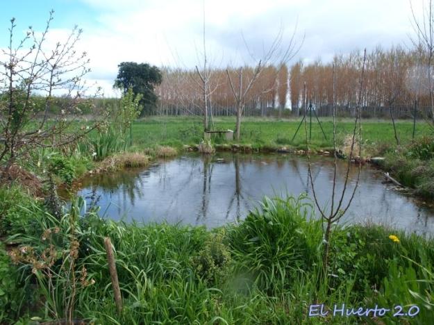 Lluvia sobre el estanque
