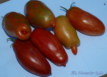 Tomate Pick Tiger
