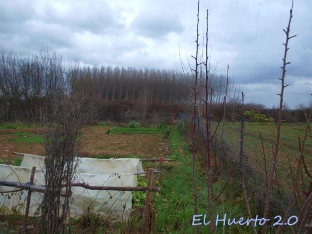 Vista del huerto 6.5