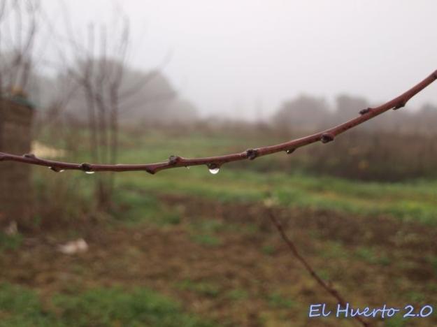 Bajo la niebla, la humedad se condensa en las ramas