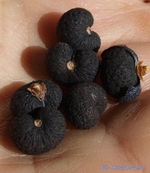 Detalle de las semillas