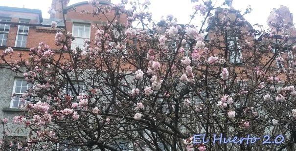 Arbustos en flor
