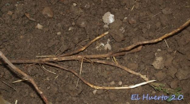 Desenterrando las raíces