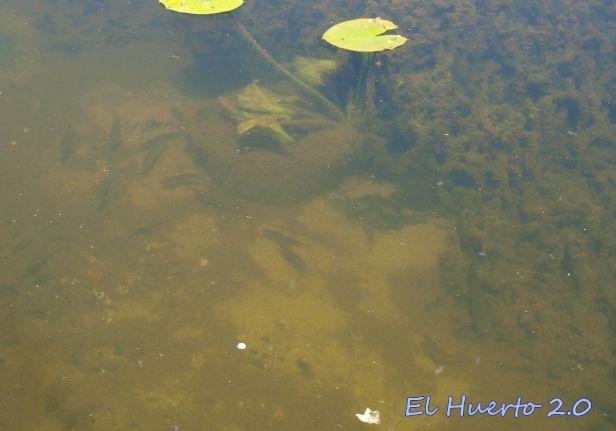 Movimiento bajo el agua