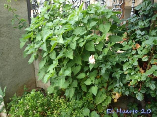 Plantas junto a pared de entrada
