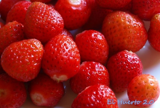 Fresas lavadas y sin pedúnculo