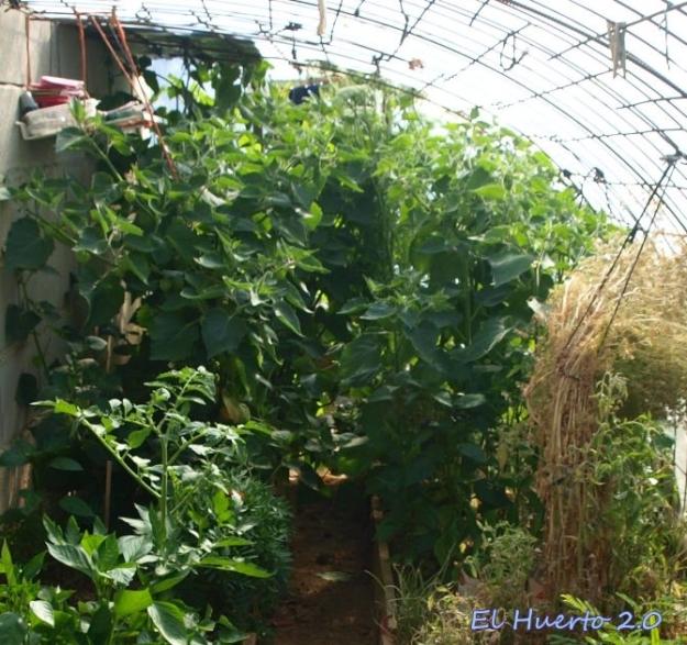 Plantas en el interior del invernadero
