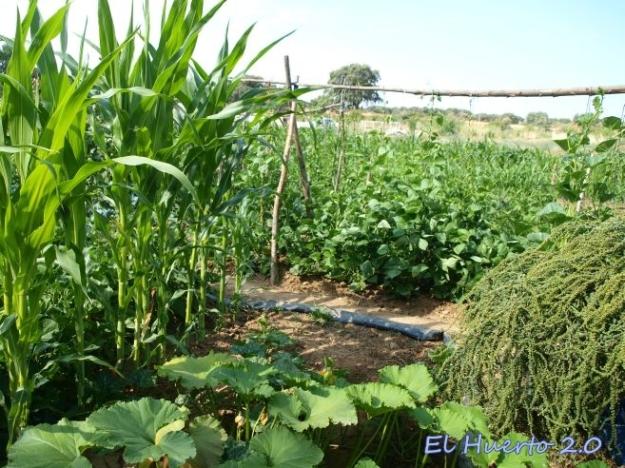 Cultivos del huerto