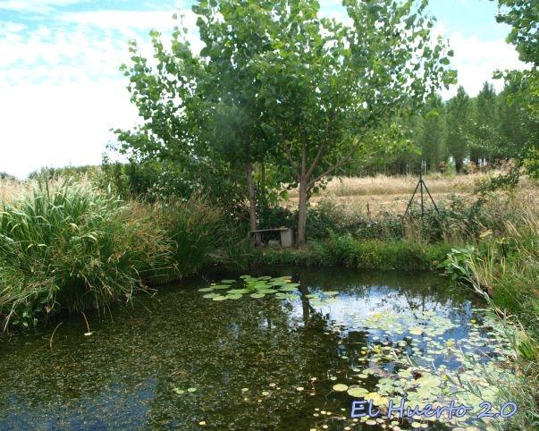 Vista general del estanque