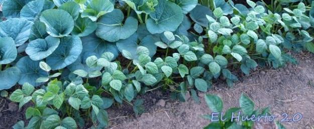Plantas jóvenes en las primeras fases de cultivo