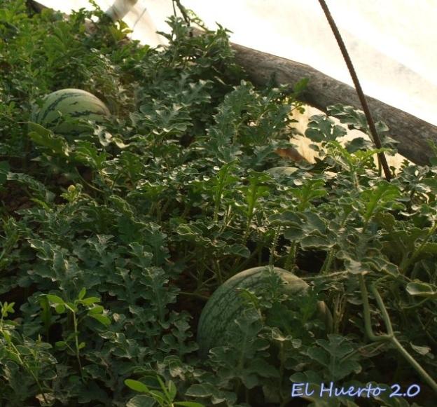 Frutos en el túnel