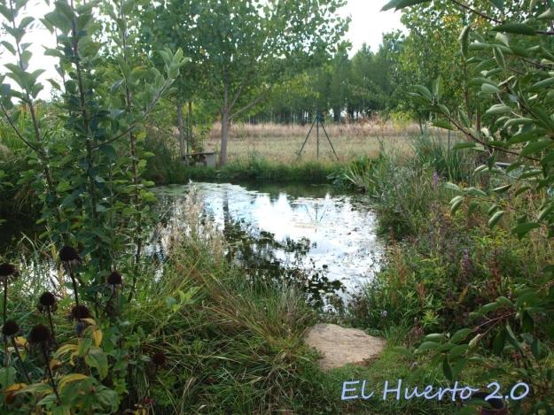 Mirada al huerto en la semana 40.2-estanque