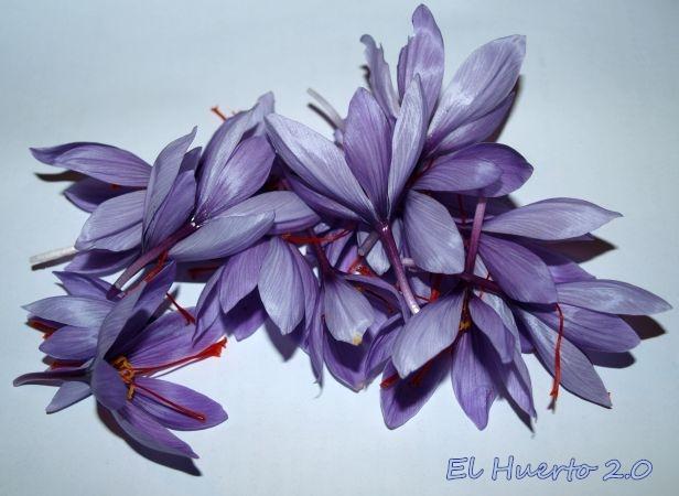 Cosecha de flores