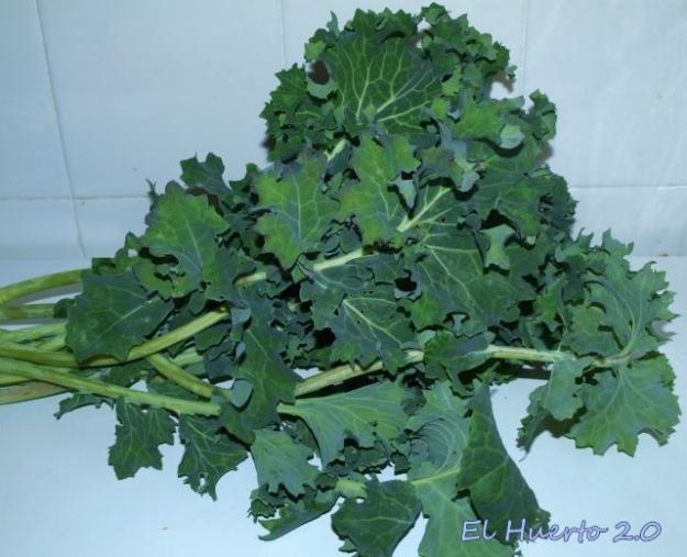 Monojo de Kale en la cocina
