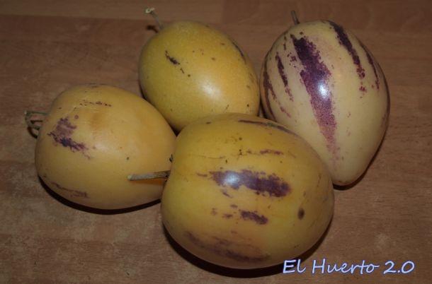 Fruto del Solanum en esta época