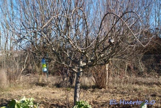 Manzano de reinetas antes de la poda